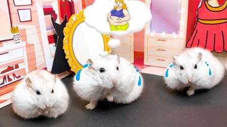 爱玩的仓鼠:仓鼠体操障碍课程,带陷阱的迷宫仓鼠会成功吗?
