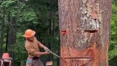 这伐木是什么水平??