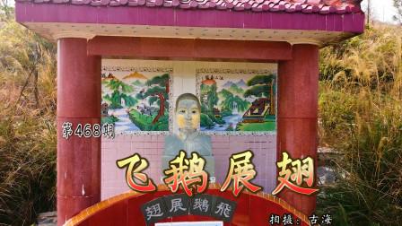 带你去看广东化州江湖中的飞鹅展翅