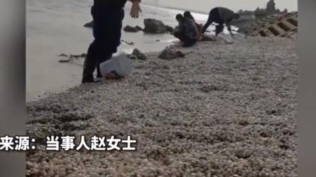 一场大风吹来一海滩的蛤蜊!随便一捡好几十斤,网友:蒜蓉已切好