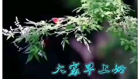 一束茶花+花盟