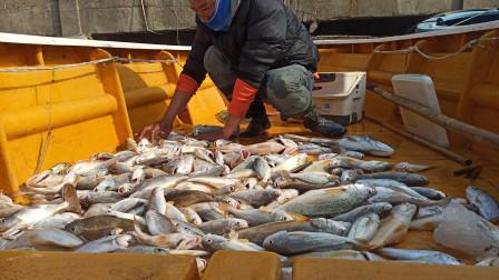 海上风塔钓鱼第2集,通宵一晚还是不错收获,都是好货
