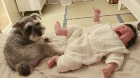 宝宝边哭还一直用脚去踢狗狗,接下来狗狗的举动,网友直呼:太暖了