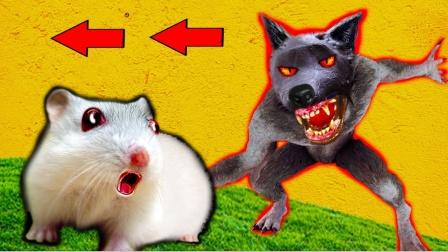 爱玩的仓鼠:仓鼠来到狼人陷阱迷宫,简直太不可思议了!