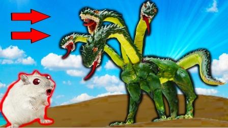 爱玩的仓鼠:新国王吉多拉陷阱迷宫,仓鼠非常的勇敢!