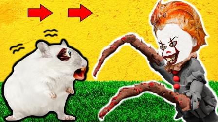 爱玩的仓鼠:带陷阱的仓鼠障碍迷宫,这下仓鼠遇见了谁?