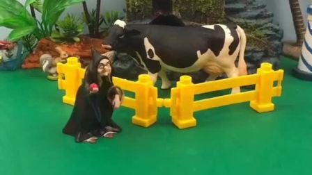 白雪给牛先生抓草吃