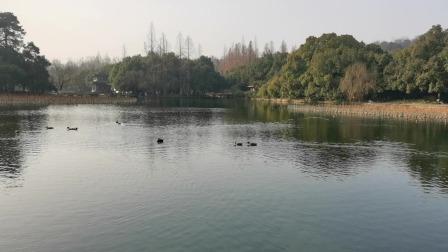 西湖景区曲院风荷看鸭子,小朋友们都很好奇