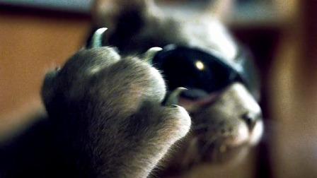 小猫小狗原来可以这么酷,太帅了,成精了