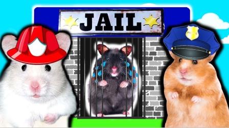 爱玩的仓鼠:仓鼠警察假装阻止黑仓鼠行为,黑仓鼠能发现吗?