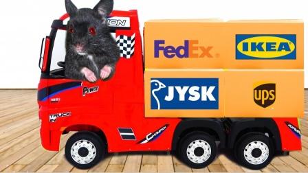爱玩的仓鼠:可爱的仓鼠假装玩卡车,和一起装饰打扮仓鼠屋!