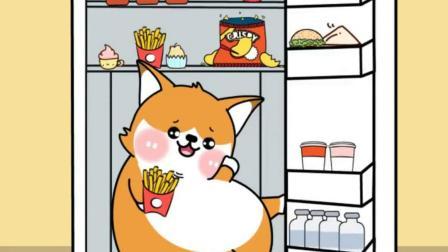 芝麻狐:打开冰箱看到了一只芝麻狐
