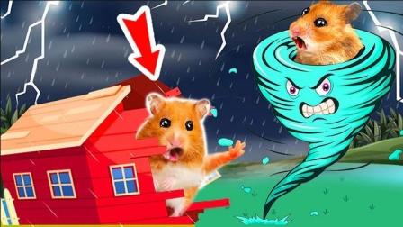 仓鼠遇龙卷风,去哪里找安身之所呢?