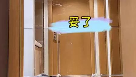 见过弹跳力爆表的猫咪吗?后面的蓝猫惊呆了