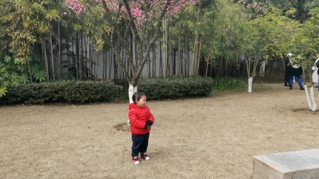 东吴公园梅花开,春天来了,萌娃都想拍照了