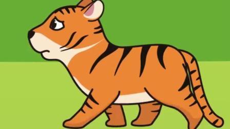 虎王的故事:虎妈妈和小狼分头去找小虎