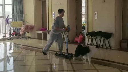 别人都是出门遛狗,我家姑娘是在家遛狗,只能怪家里的房子太大了