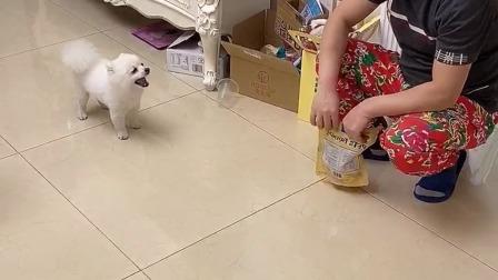 少儿益智:能听懂人话的小狗