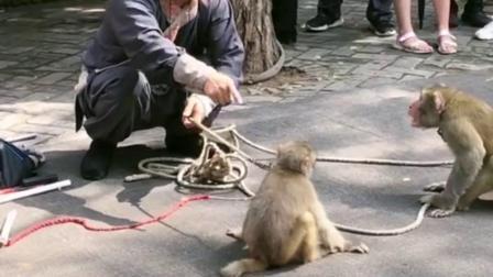 这是人耍猴,还是猴耍人