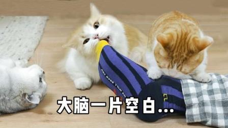 用猫薄荷洗澡后,男朋友差点被猫吃掉!