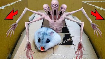 仓鼠赛道怪物不断,小仓鼠竟然一点也不怕