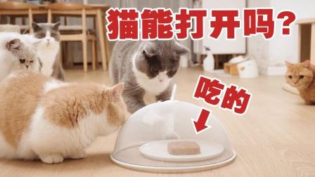 猫为了吃能有多努力?菜罩子罩住罐头,猫的举动惊了#酷知#