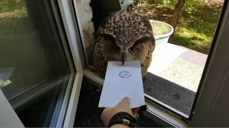猫头鹰给主人送信,却死活不松口,原来是要对暗号啊