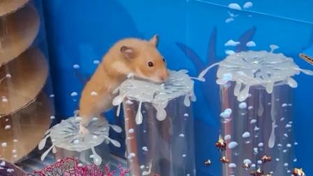 这海底世界还真是奇妙