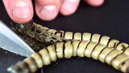 将响尾蛇的尾巴切开,里面究竟长什么样!为何会发出响声呢?