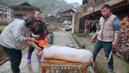 贵州杀年猪了这猪刚好250斤,6个大男人都拉不住