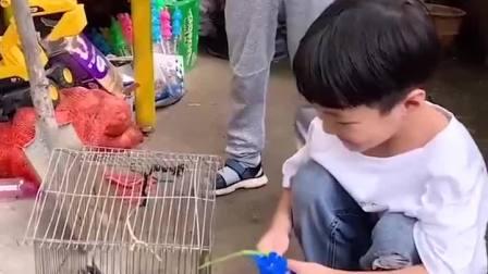 童年趣事:原来鸽子喜欢吃韭菜呀