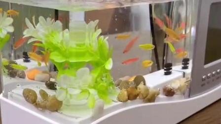 最吸引人的鱼缸,有没有吸引到你