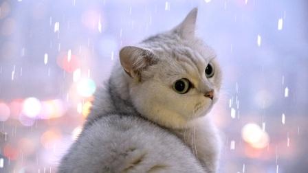 南方猫第一次见下雪,堆雪人给猫玩儿,超级治愈!