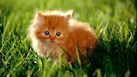 可爱的猫猫图片抽奖,截到哪个是哪个~算卡点咩?🐱🐱🌸🌸