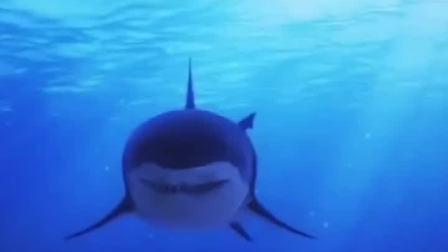 为什么鲨鱼不吃海豚呢
