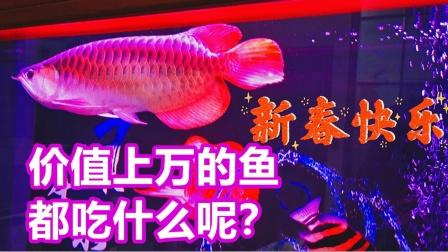 亚当熊VLOG:看看价值上万的鱼究竟都吃什么?