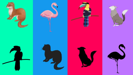 趣味识动物:快帮小动物们找到自己的影子吧!认识黄鼬狼等动物