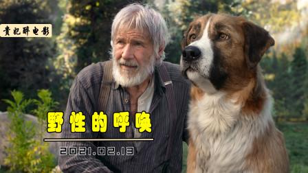 富家狗被迫买到深山老林,历经磨难,竟成了山中狼王!