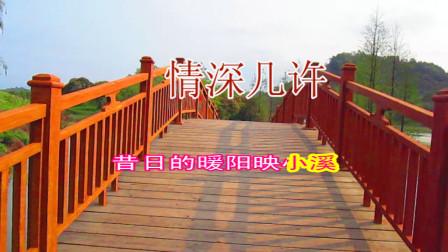 杨小壮-《情深几许》网络流行歌曲 最新DJ舞曲