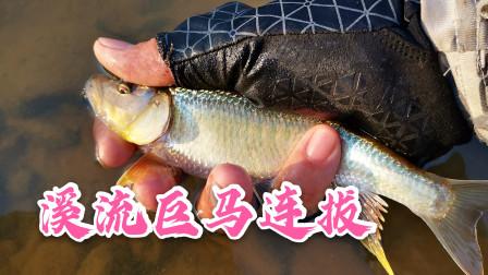 惠州溪流连拔巨型马口,光哥开心合不拢嘴,广东乡下的资源真好