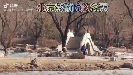 北京紫竹院公园的冬天