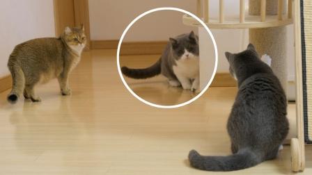 借宿小猫刚解封,就惨遭2只大猫夹击暴打,无处可逃却遇老猫撑腰