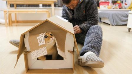 """新年了,老爸出钱给猫咪们盖""""新房""""贴春联,猫:以后跟姥爷过了"""