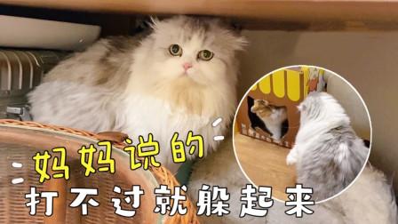 手贱小猫频频挑衅老实大猫,结果惨遭反杀,慌不择路钻桌缝逃命