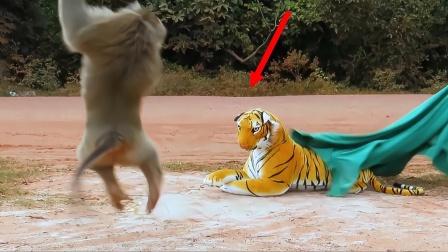 """人们给猴子准备大惊喜,猴子被吓到飞起,直接变成""""窜天猴""""!"""
