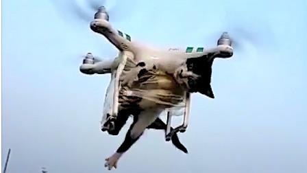无人机安全飞行20210218 每天最新炸机实例 助你提高安全意识