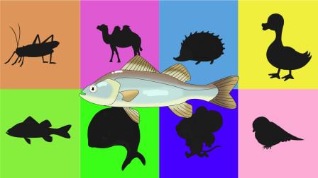 趣味识动物:彩色卡片里都有什么小动物呢?认识鲈鱼麻雀等动物