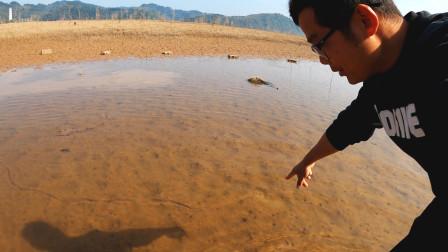 江边枯水塘全是弯弯曲曲的泥痕,痕迹尽头暗藏野货,这回撞好运了
