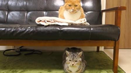 猫咪趴下后为什么要揣起小手手,真的是因为优雅?