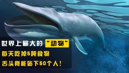 世界上最大的动物,每天吃掉5吨食物,舌头竟能站下50个人!